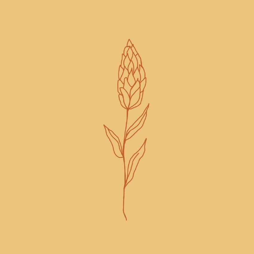 Grass Seed Illustration - Rumu Creative