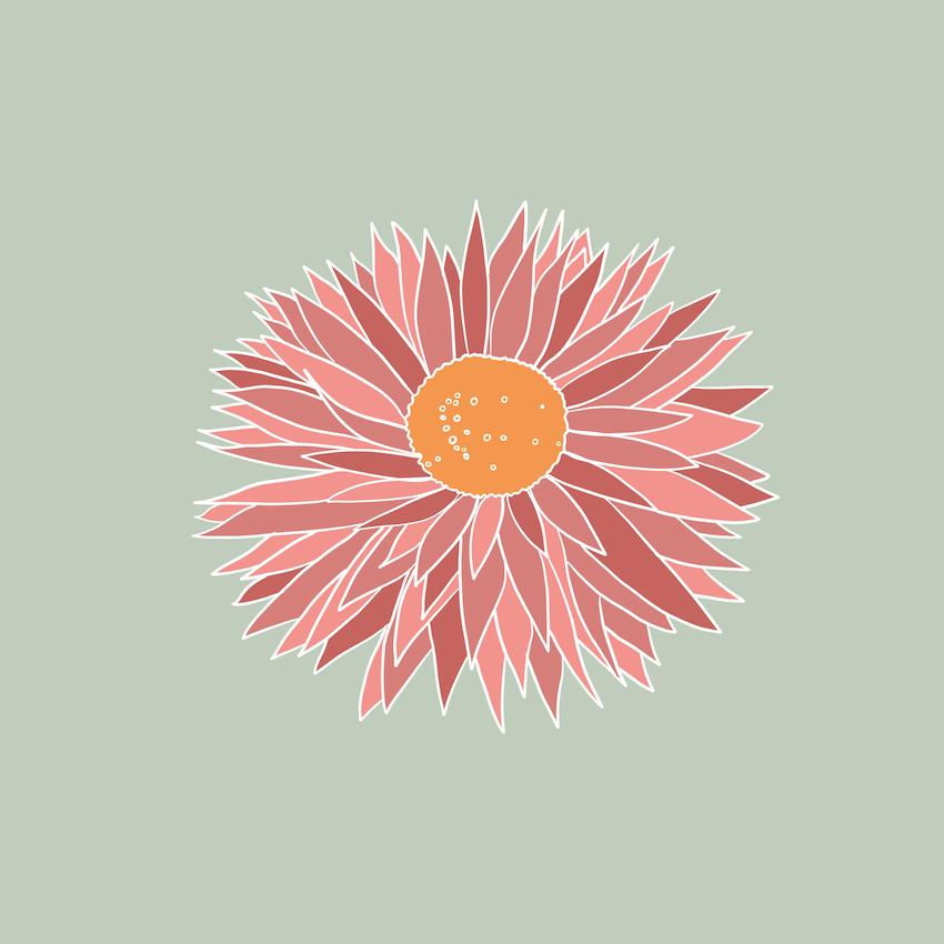 Paper Daisy Illustration - Rumu Creative